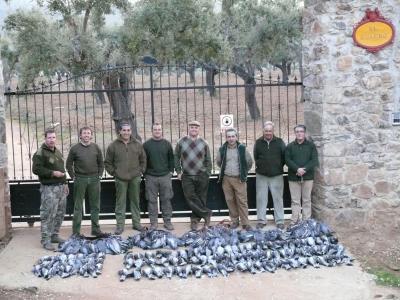 Torcaces com » Cria y Alimentos » Criar y Domesticar Palomas para Cimbel