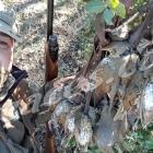 Fotos de torcaces 2