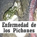 MENUS_pichones