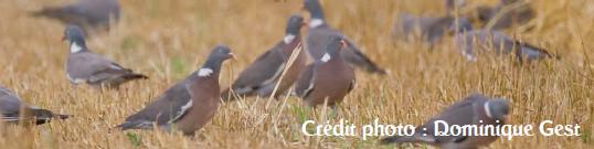 palomas comiendo en el suelo