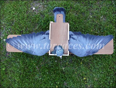 caja para maquillar palomas