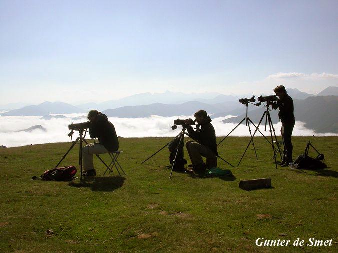 observatorio de migracion en los pirineos