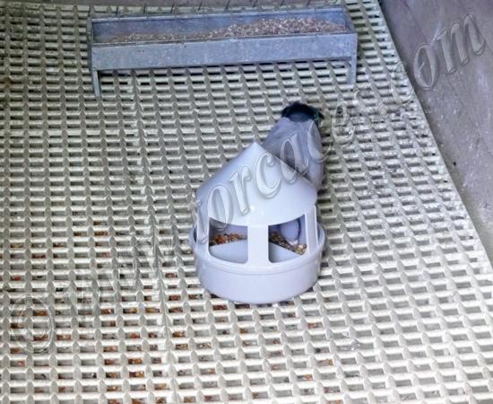 parrillas de rejillas para el suelo del palomar